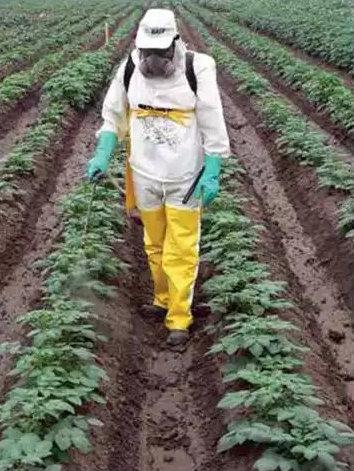 como-usar-los-agroquimicos-en-el-cultivo-de-papa-2-2_24841_10_3