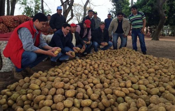 Guia-del-cultivo-de-la-papa-en-Paraguay-809