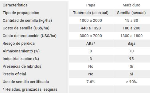 comparacion de las semillas de papa y maíz duro en Ecuador